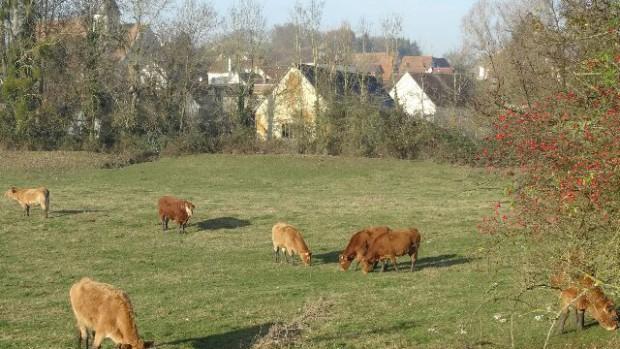vaches-au-pre_640x480