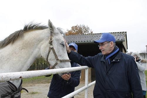 Habert - cheval